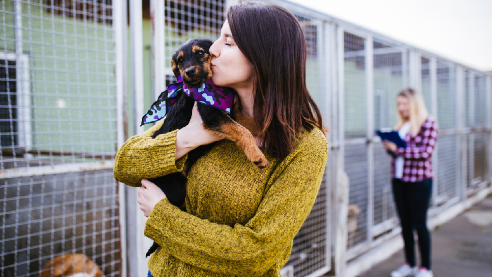 Adopt a Shelter Pet Day Photo 2