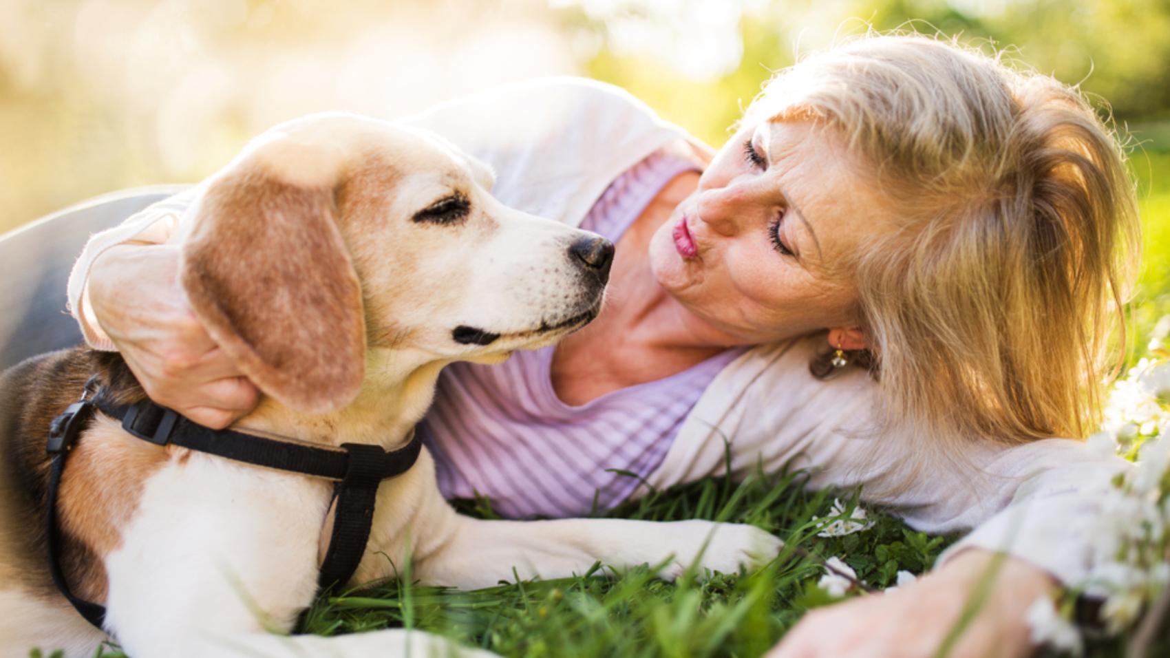 Pet Care Tips Photo 3