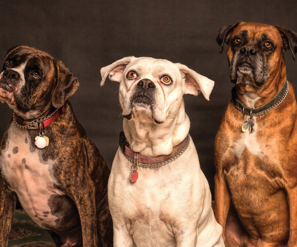Dog Feeding Schedule: How Much and How Often?