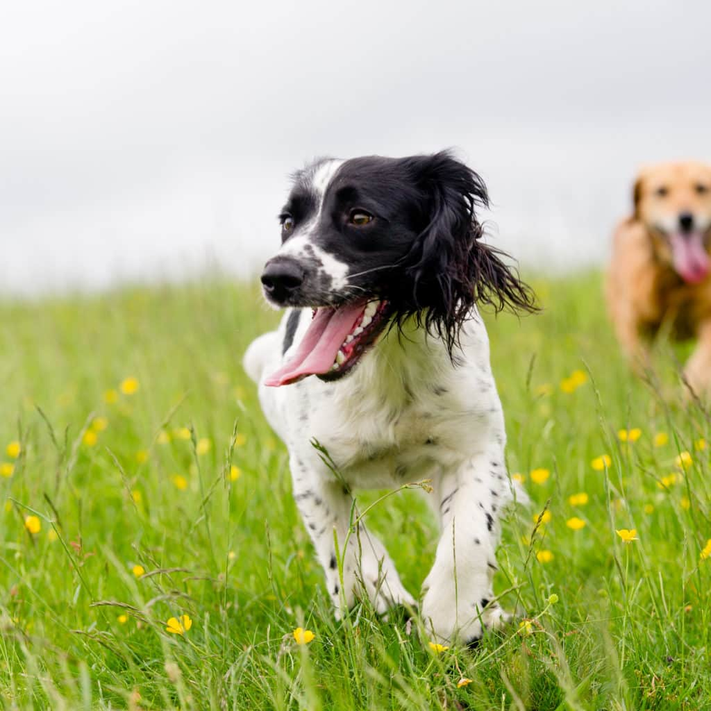 Should Your Dog Take Vitamin and Mineral Supplements?