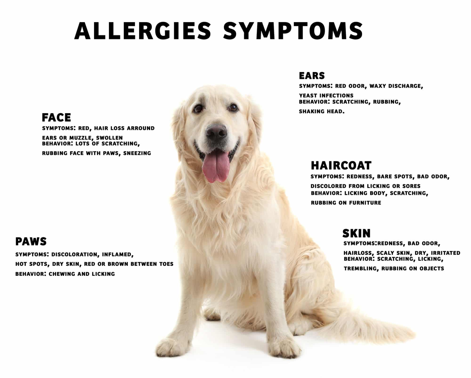 Q A With Dr Quest Dog Allergies Zignature Food For Dogs