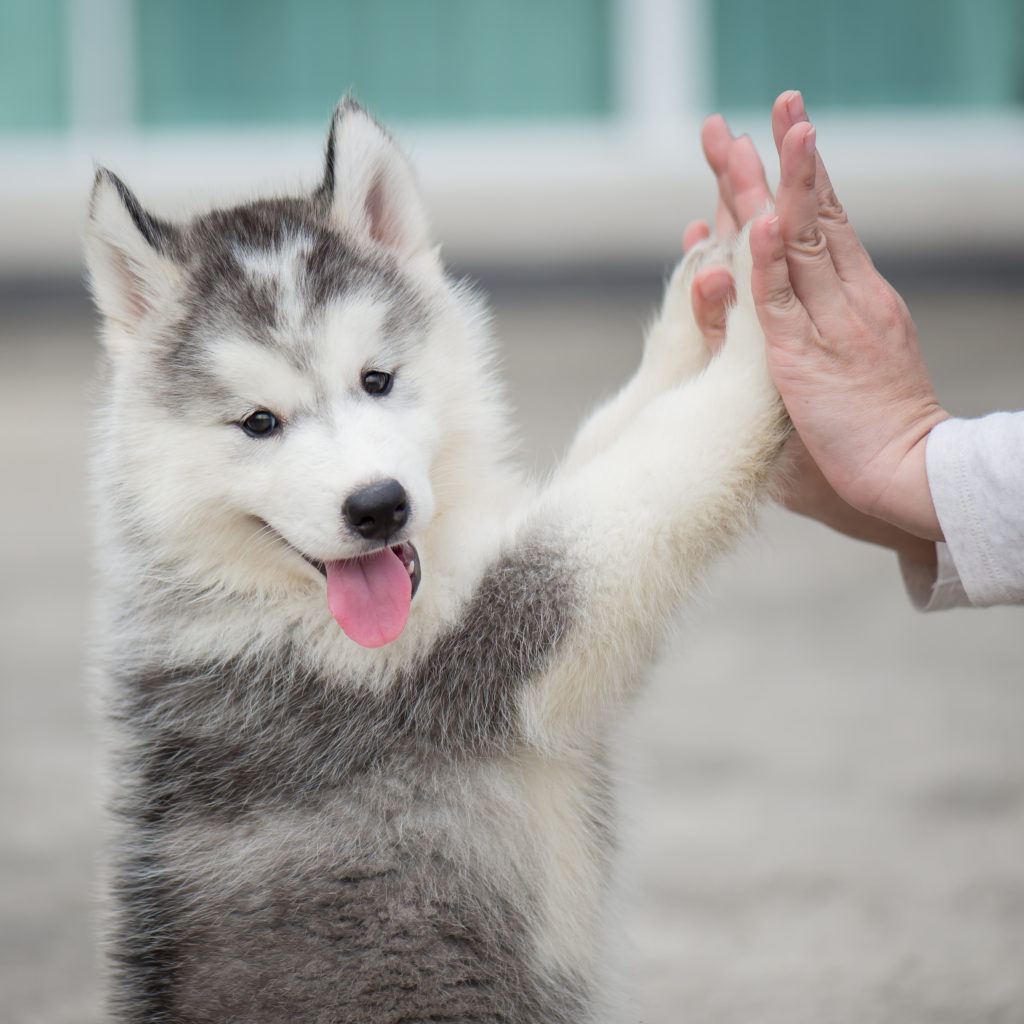 Q&A with Dr. Quest: Benefits of Adopting a Pet