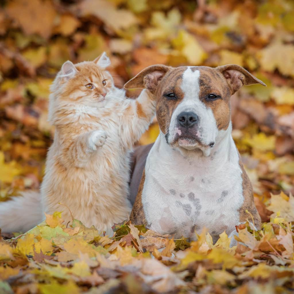 Giving Thanks To Our Fur Babies