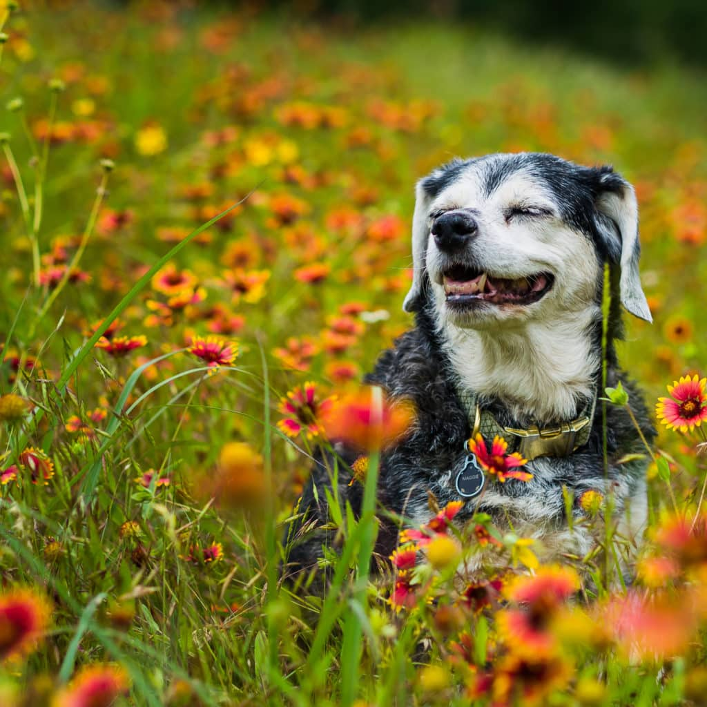 4 Things to Start Thinking About as an Older Dog Owner
