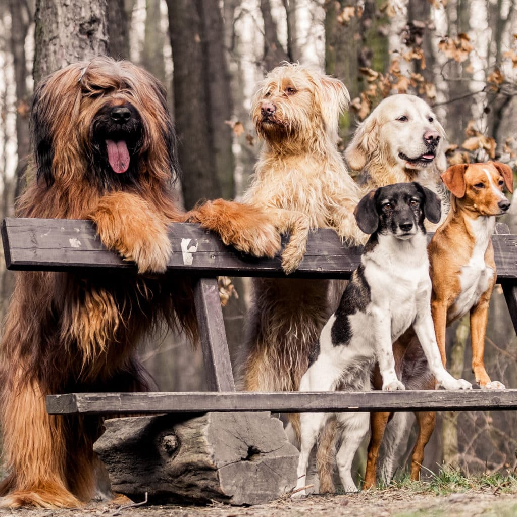 What is an All Life Stages Dog Food?