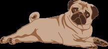 Pug_LayingDown